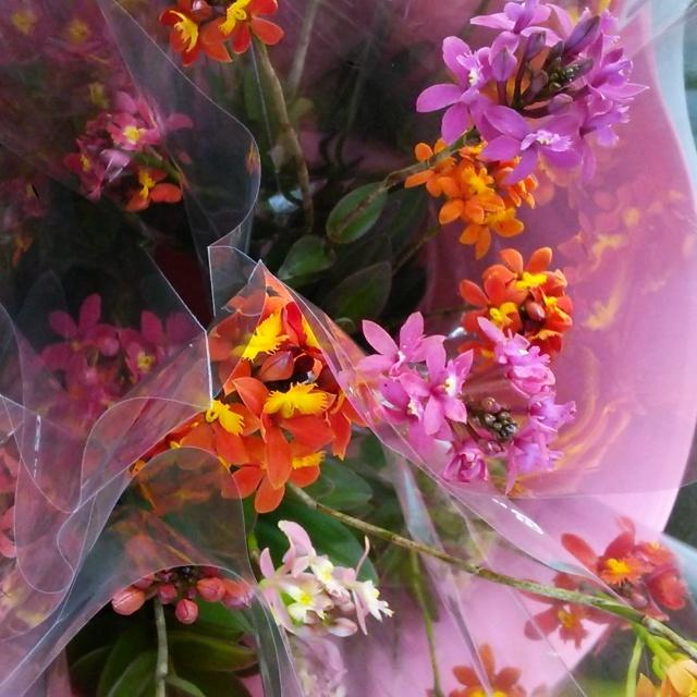 エピデンドラムMIXの花束でウキウキとした日曜日を♪