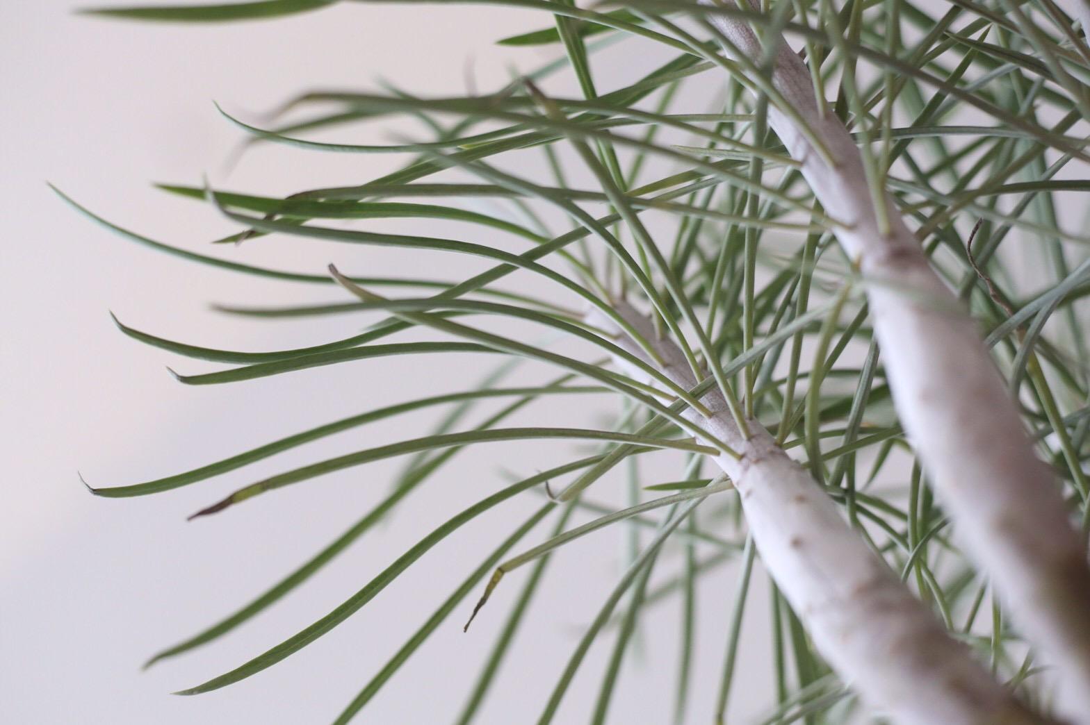 テナガザル植物2