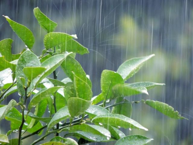 気温の変化、梅雨の雨、感染症対策…体、疲れていませんか?