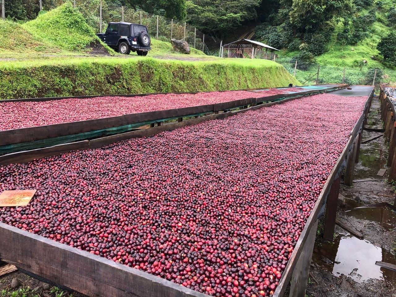 パナマよりオークション入賞農園の豆が届きました