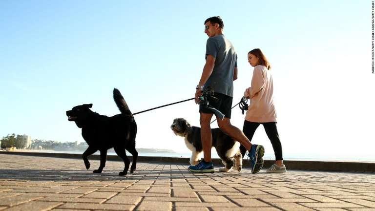 犬や猫などのペットが亡くなったら……葬式、お墓、ペット霊園の利用はどうしますか?