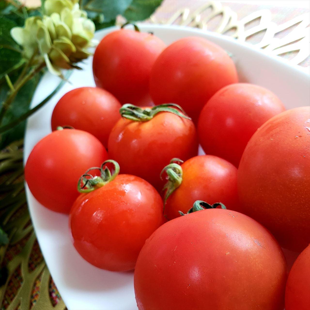 農薬を使わない、自然栽培で育った恵みのトマト