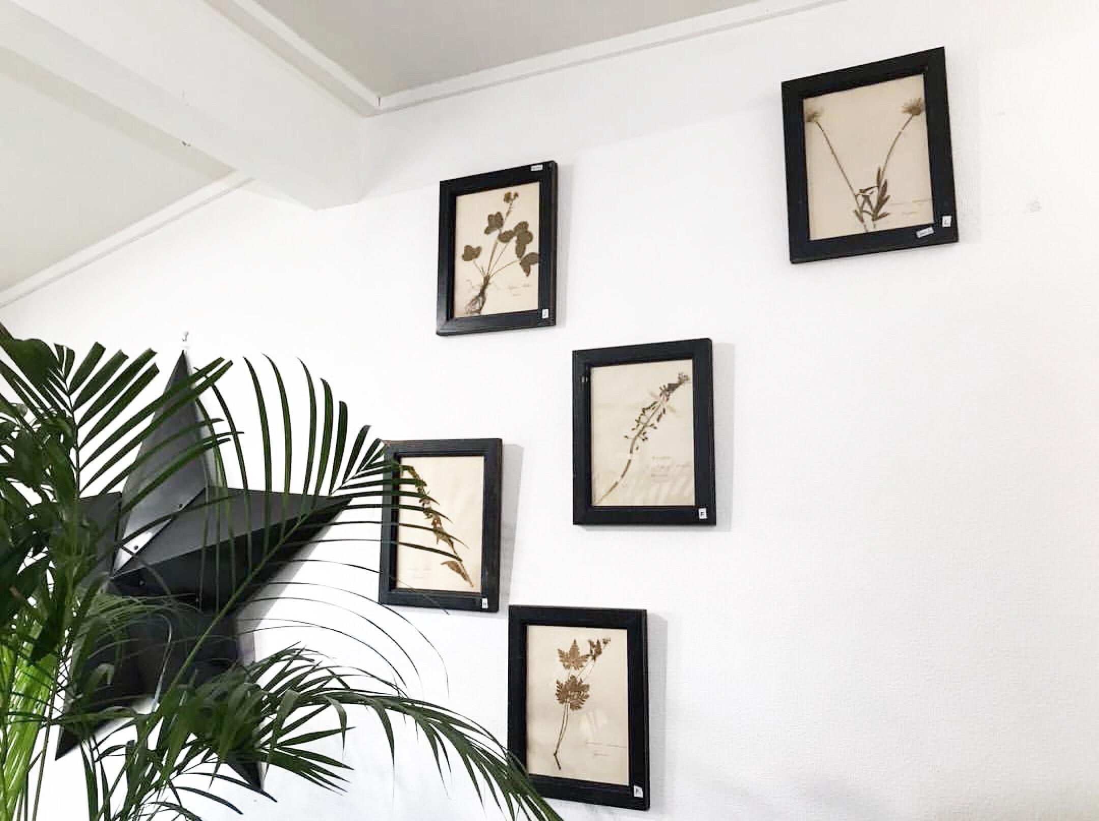 お部屋にアンティークを。フランス製の押し花標本の額装。