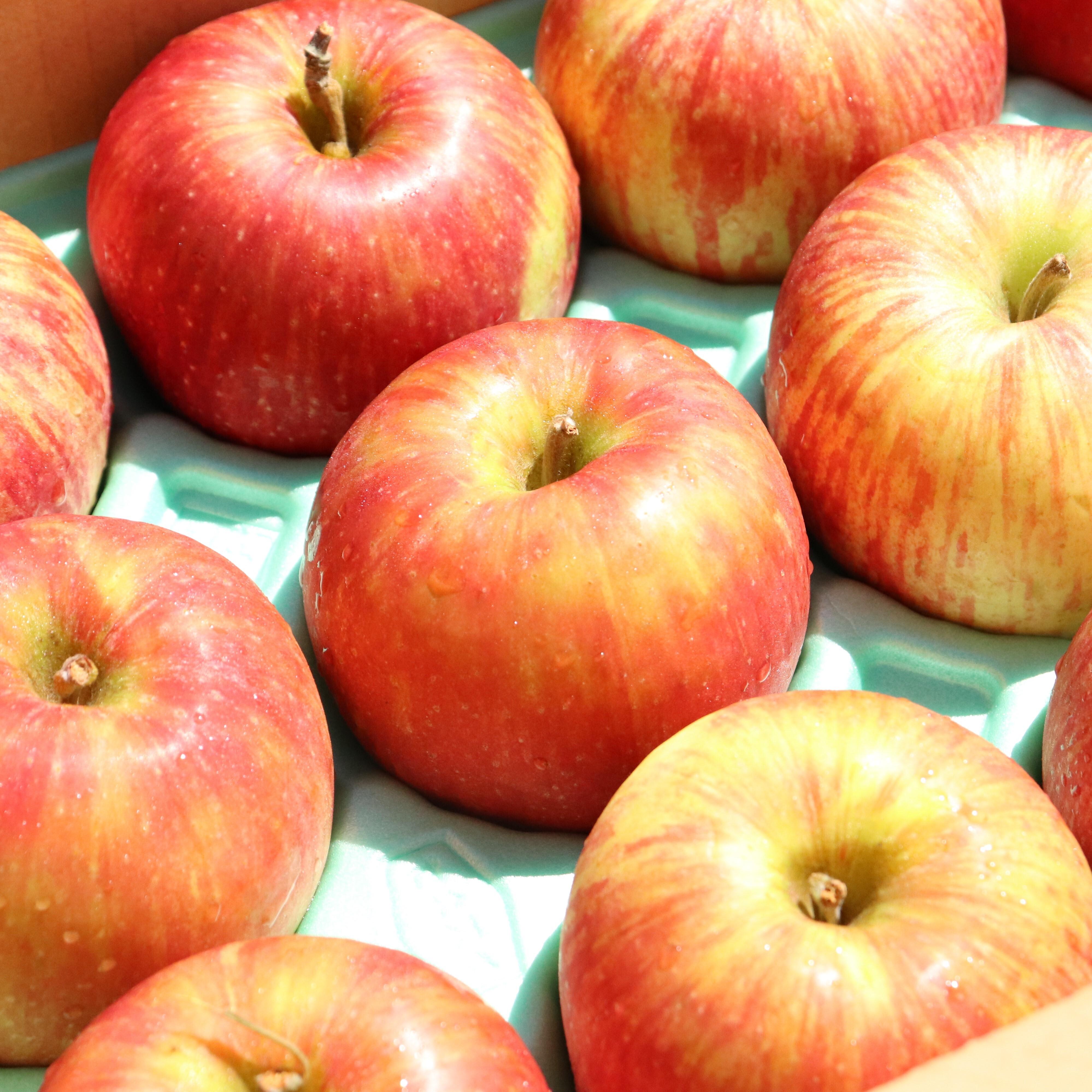 今が旬!夏のりんご【つがる】をご自宅で。