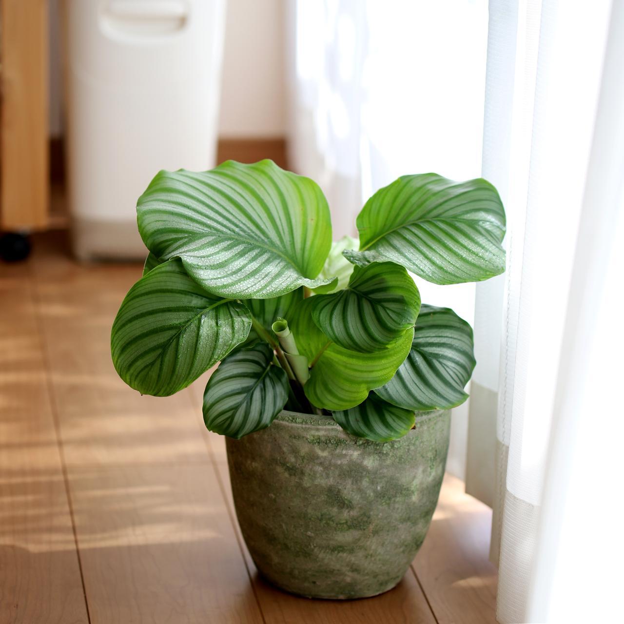 この季節、どこか気ぜわしい雰囲気を心地よく。おすすめ観葉植物なら