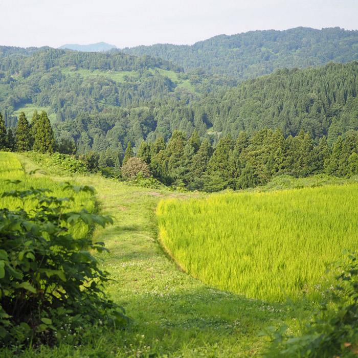 新潟の中山間地の酒米から作られた夏限定の 「麹チーズケーキ 夏のカルテット」が新発売!