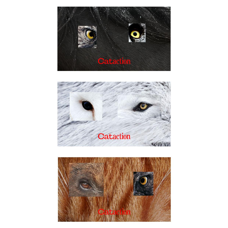 <ぜひ読んでください> Cataction のネーミングとサイトイメージについて / 非売品