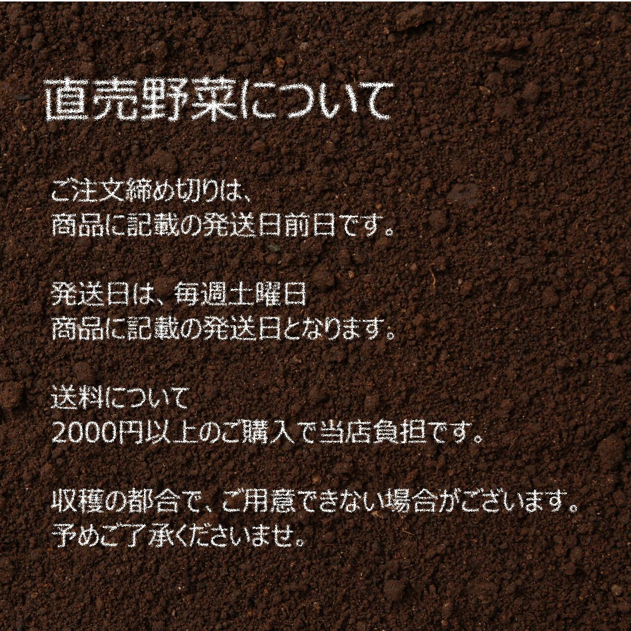 6月の朝採り直売野菜 : ズッキーニ 6月8日発送予定