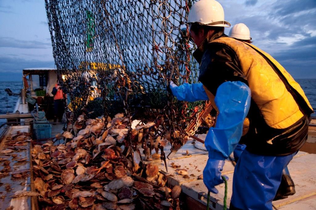 【お刺身ホタテ】(0195)オホーツク海枝幸産ぷるるんホタテ貝柱 生食用 1㎏