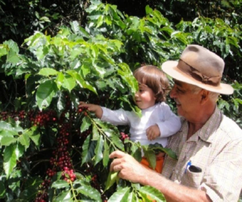 【500g】ブラジル ファゼンダ サンタ ルシア ~Brazil fazenda santa lusia~