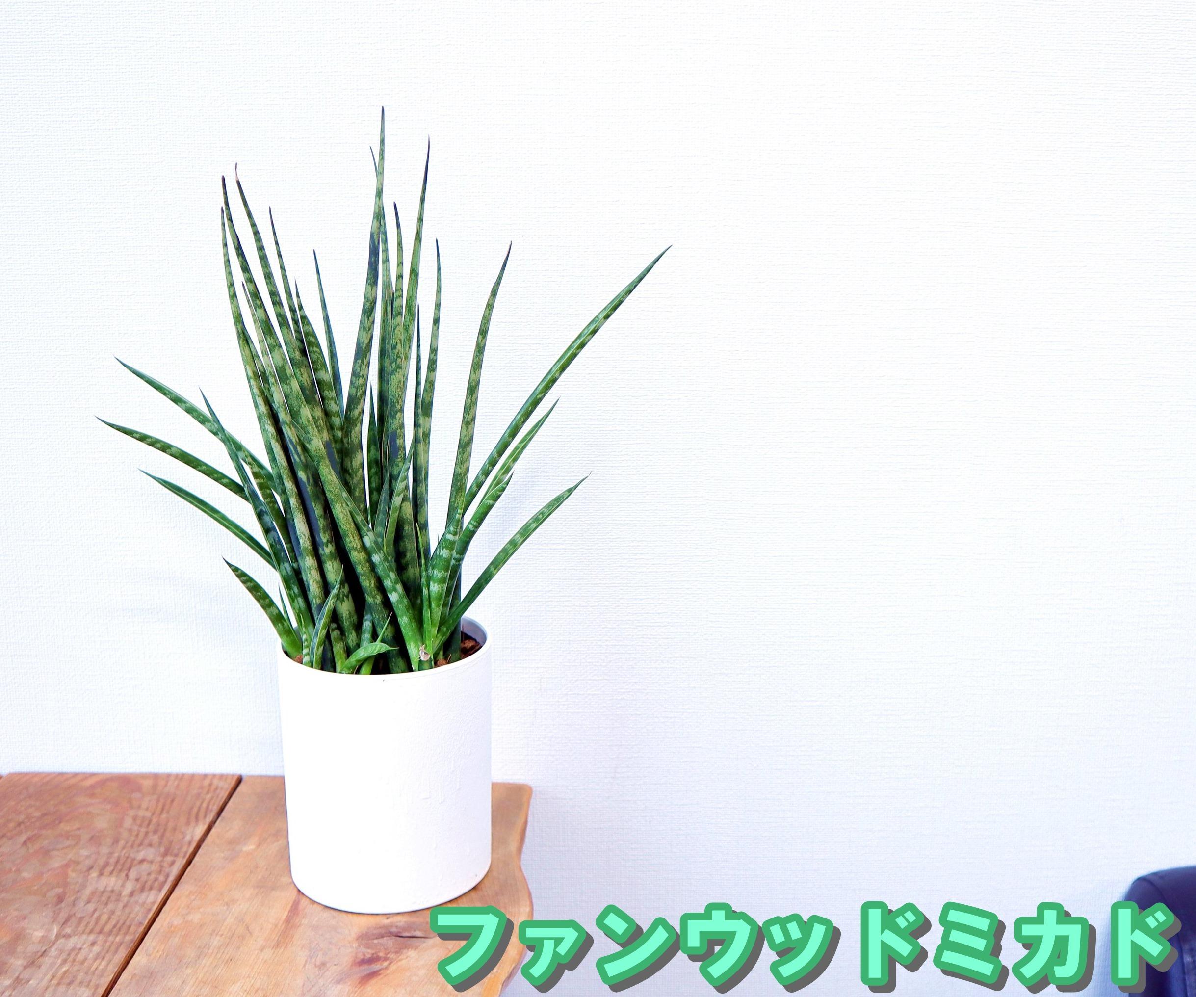 お部屋のミニ空気清浄機 選べる4種 サンスベリア