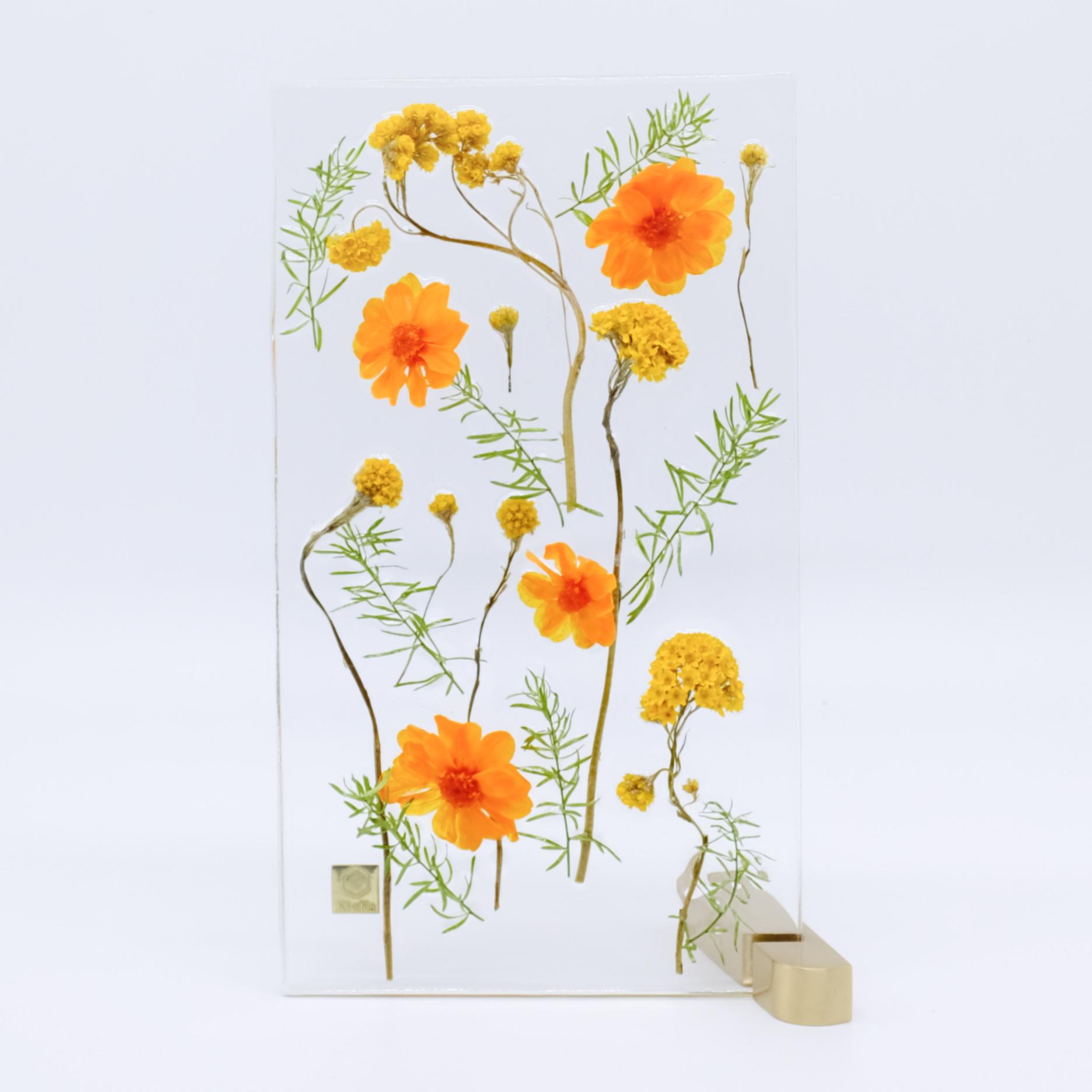 dried flower M ジニア