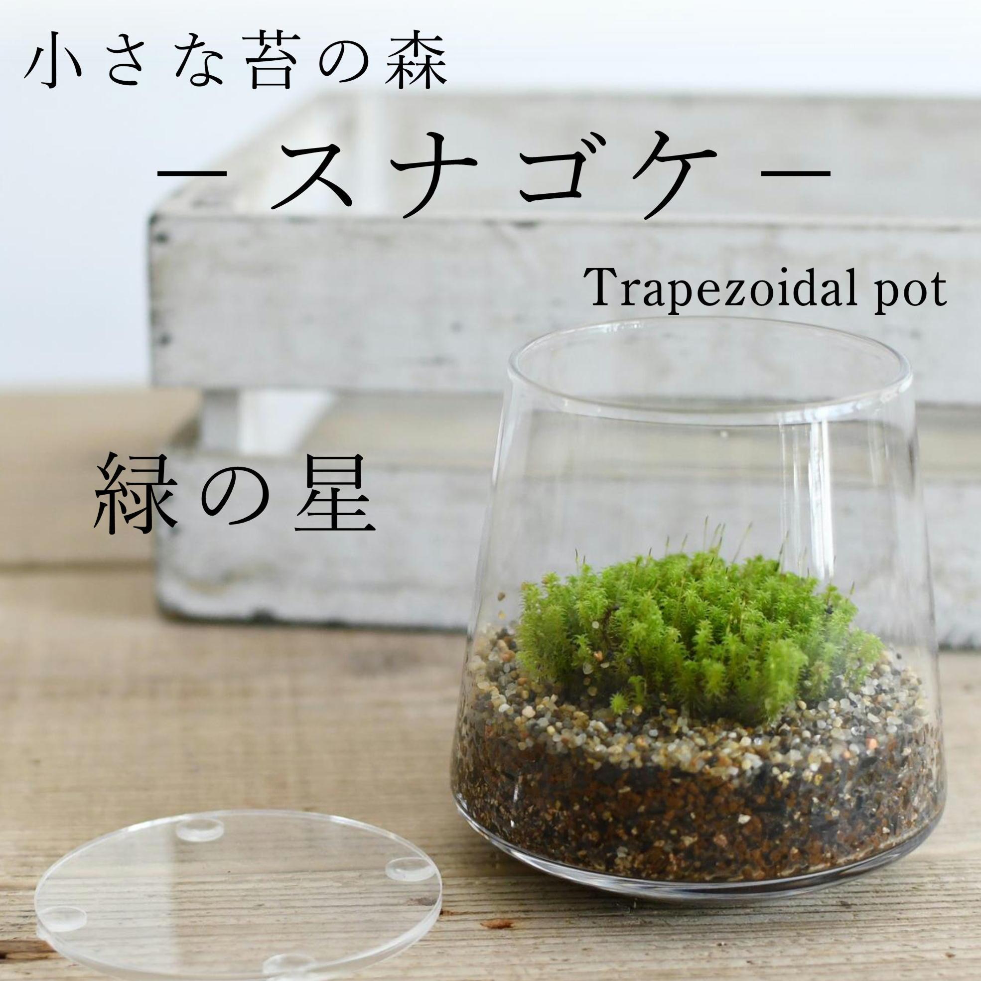 小さな苔の森−スナゴケ− 台形ポット◆緑のお星さま【苔テラリウム】
