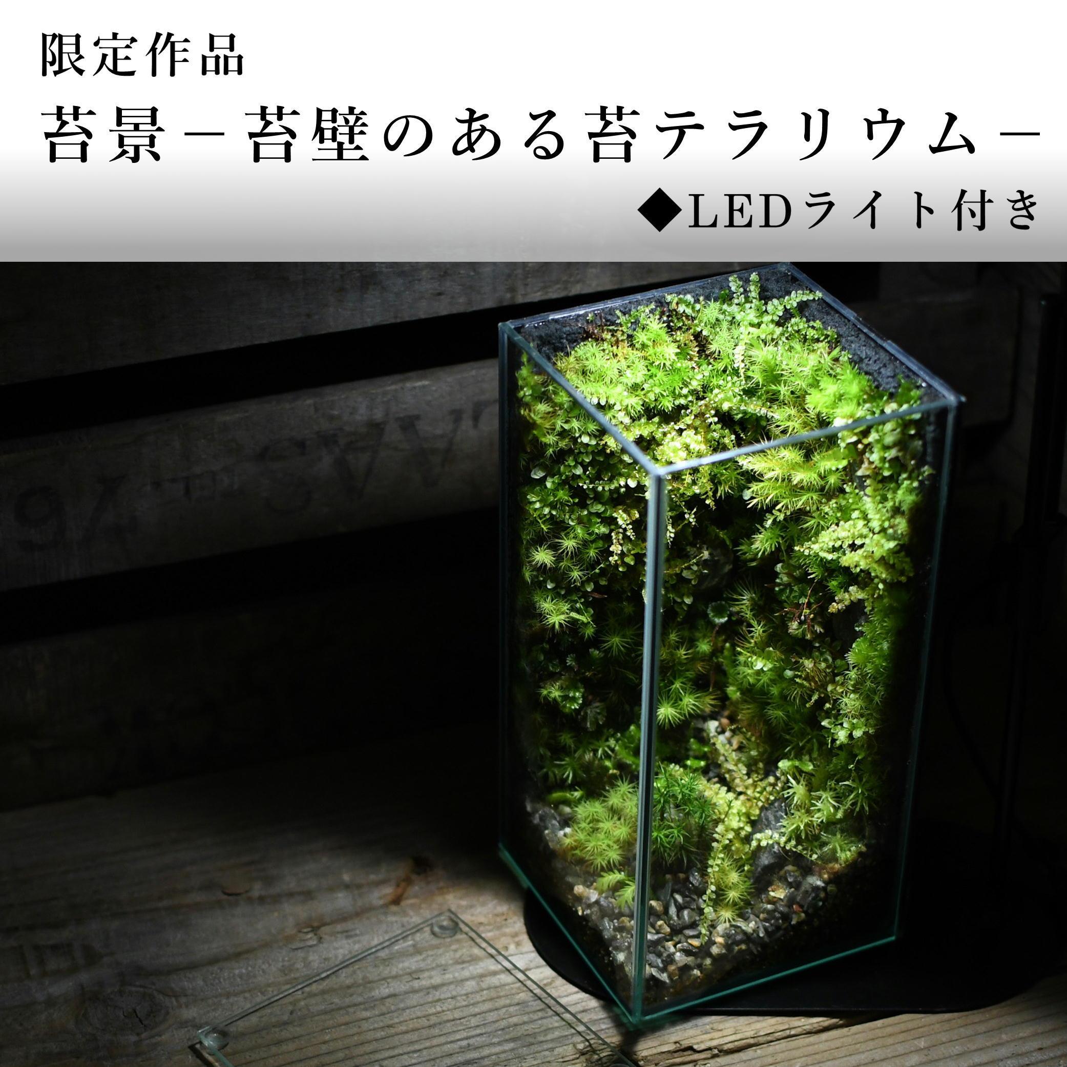 苔景−小さな苔壁のある苔テラリウム−【苔テラリウム・現物限定販売】◆LEDライト付き