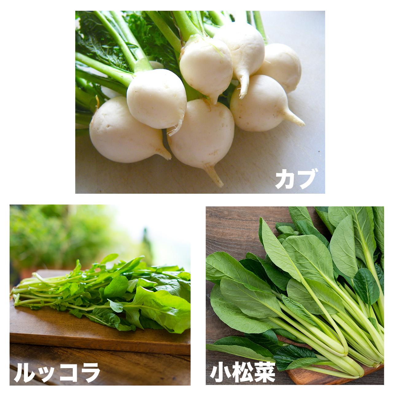 【お得!】セットプラン⑤(カブ・ルッコラ・小松菜)