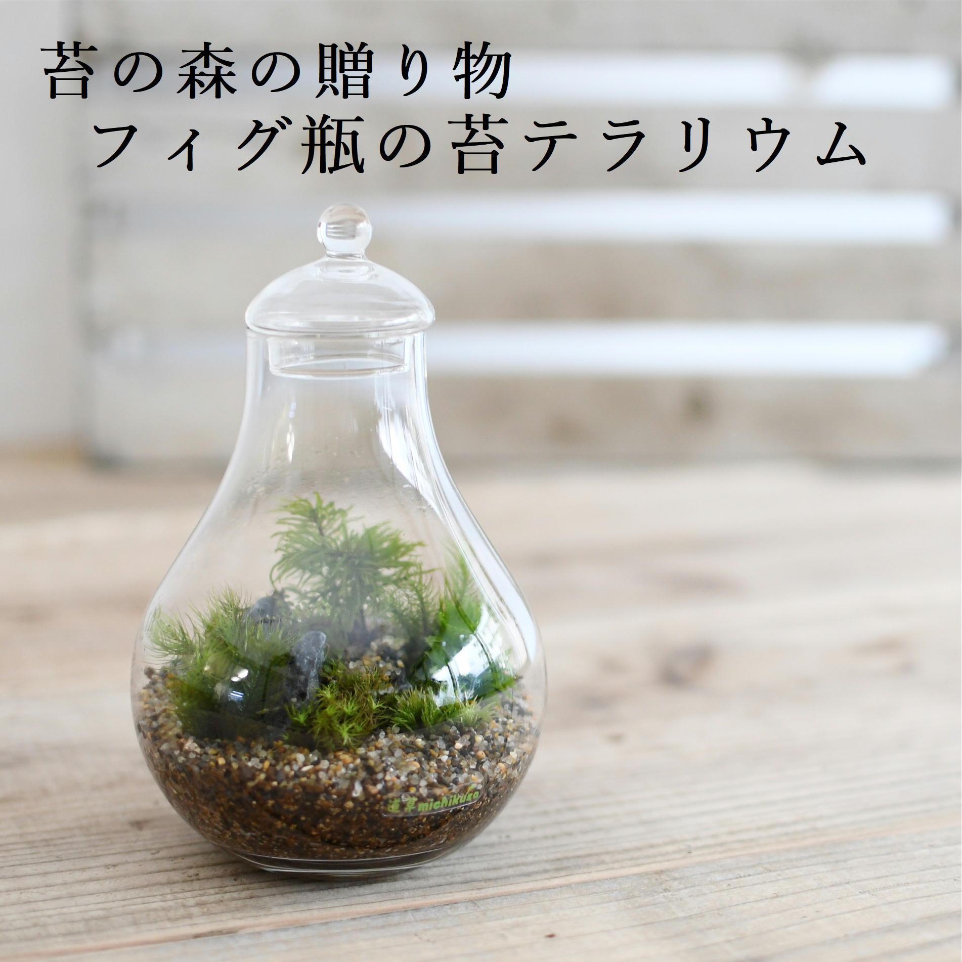 【苔の森の贈り物】苔テラリウム フィグ瓶