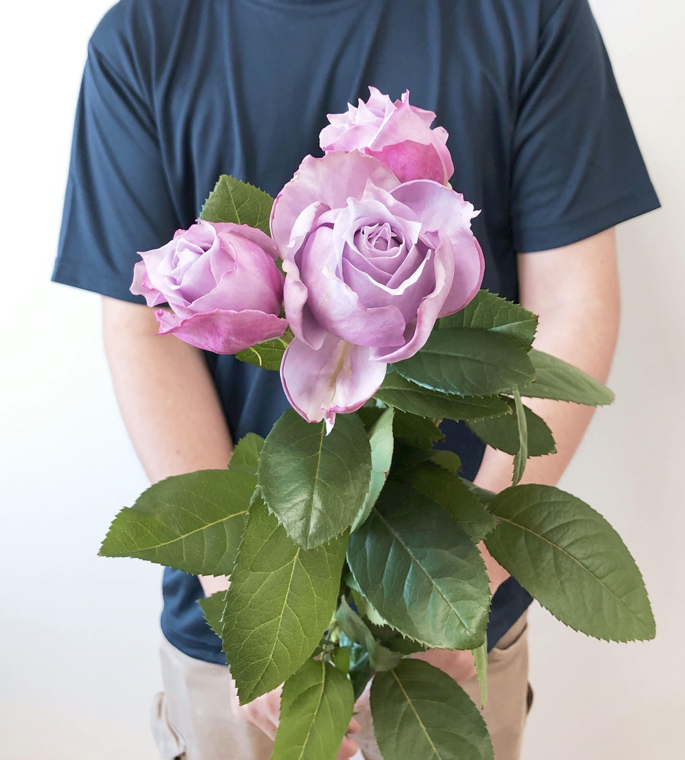 ※市場直送便!京果園 10本 ★バラ品種名: ノヴァーリス