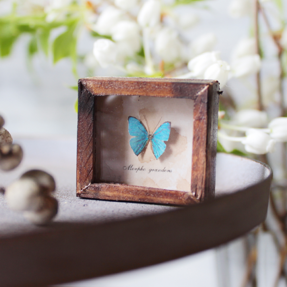 蝶のミニチュア標本箱_モルフォチョウ【胡蝶の夢】