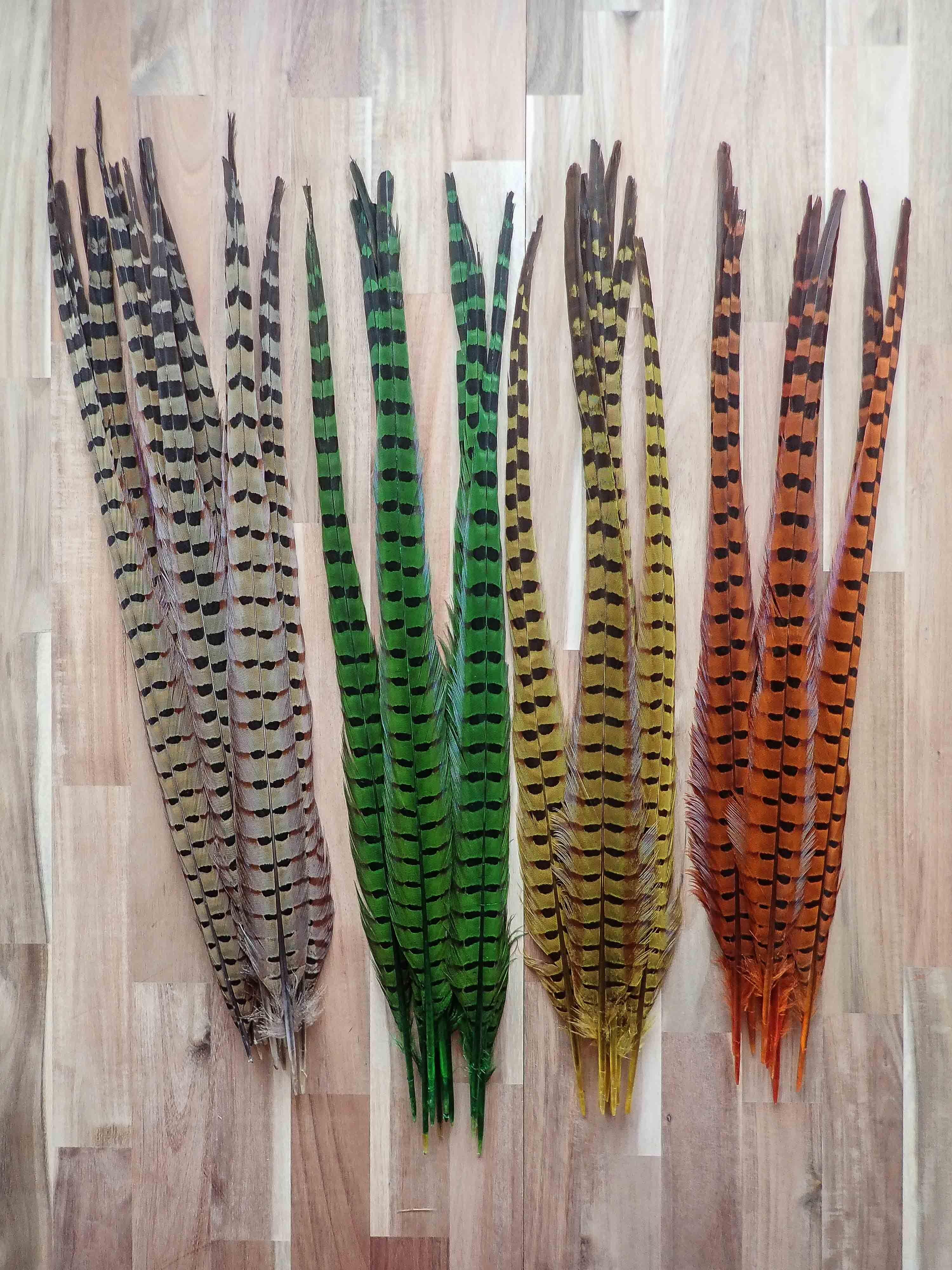 Pink Tip Ringneck Pheasant Tail