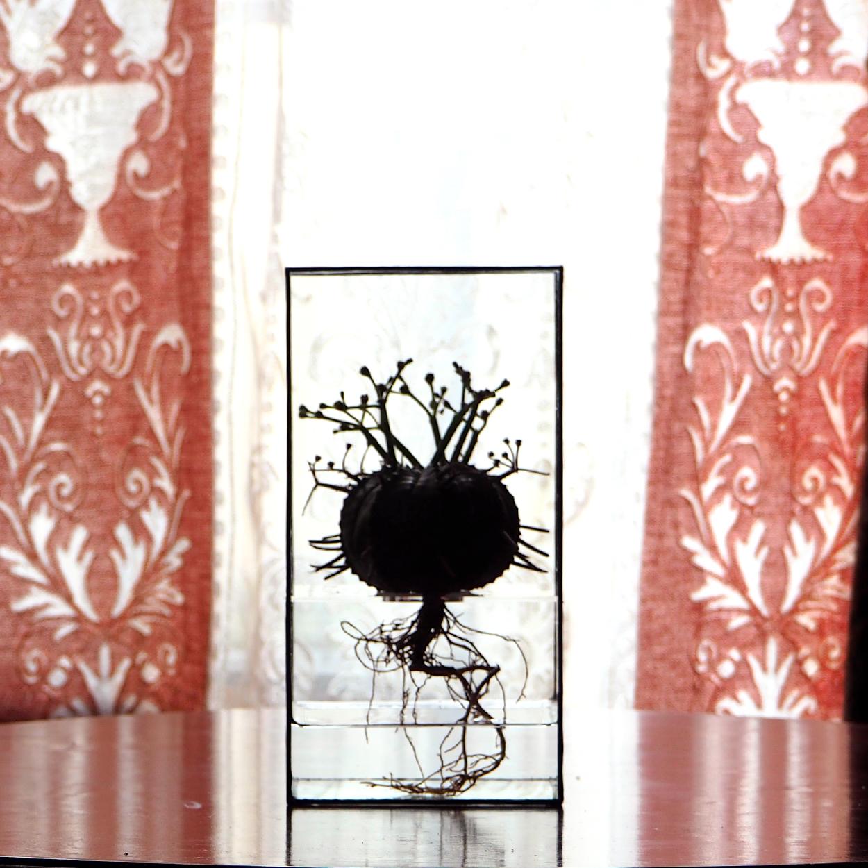 Hydroponics Terrarium Frame - Black