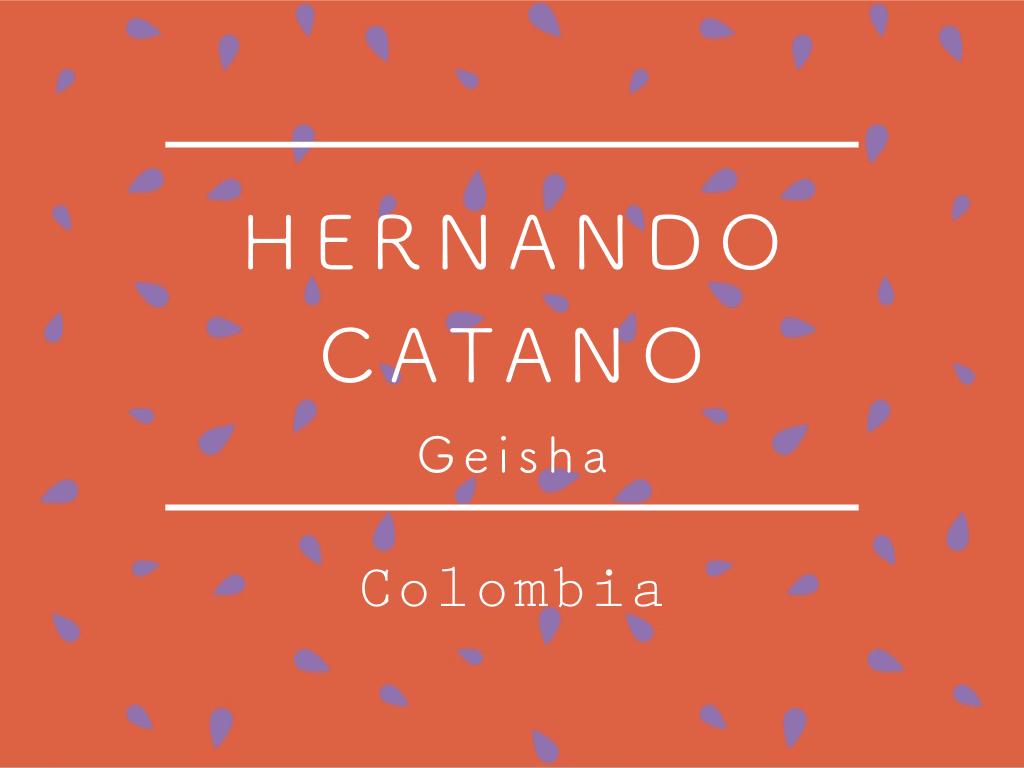 """【100g】コロンビア / HERNANDO CATANO """"Geisha"""""""