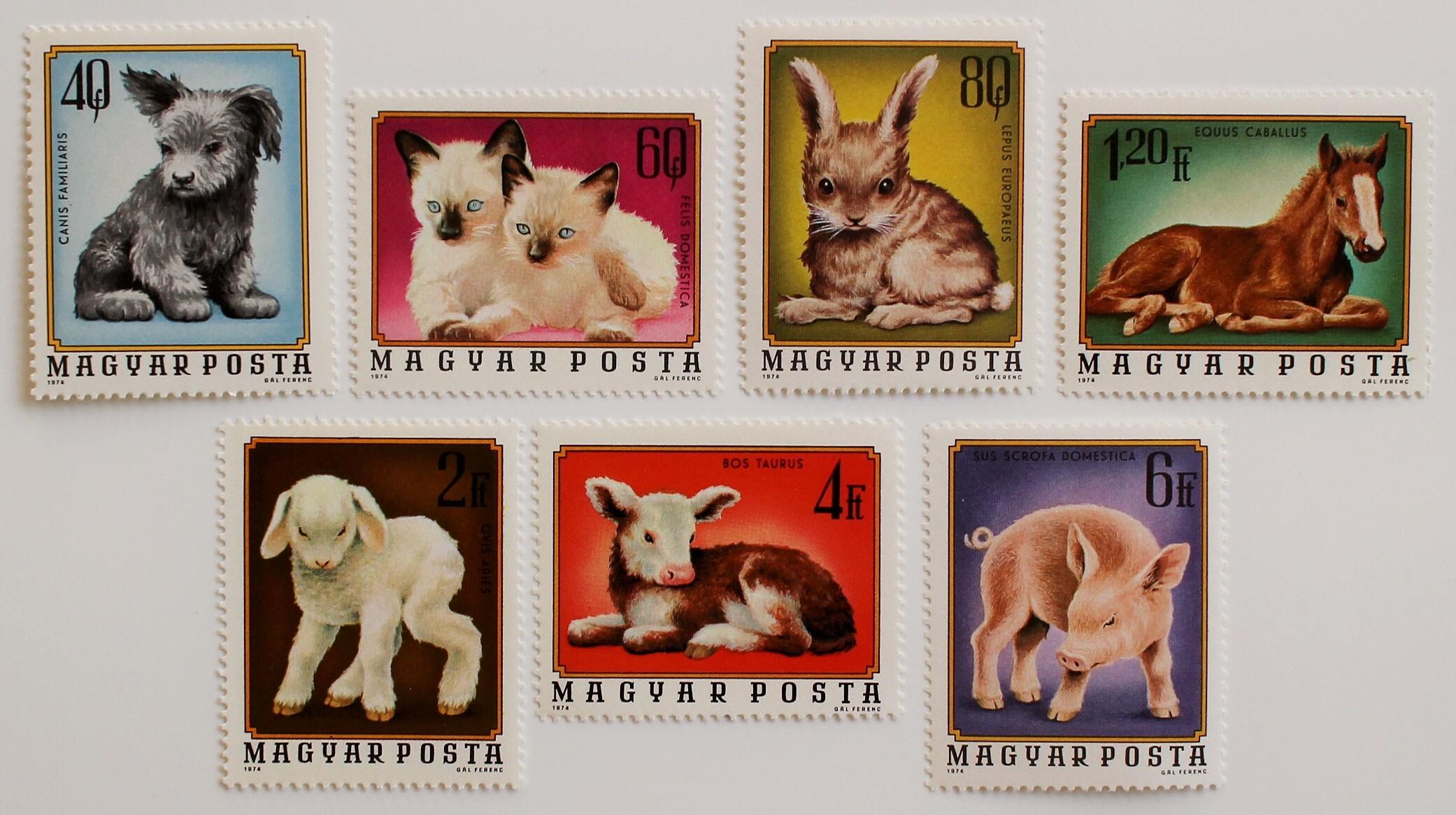 動物の赤ちゃん / ハンガリー 1974