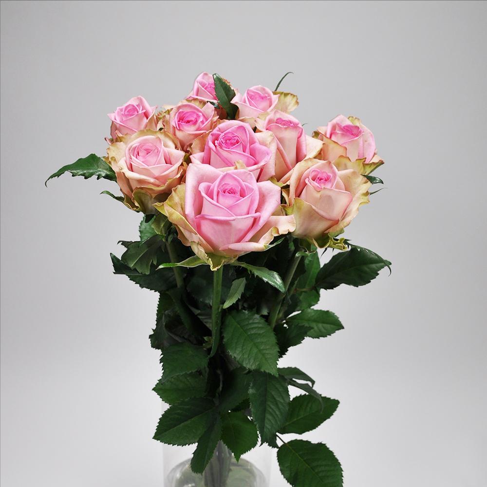 Rose  アンドロイド 10本 (JAしみず バラ部会)