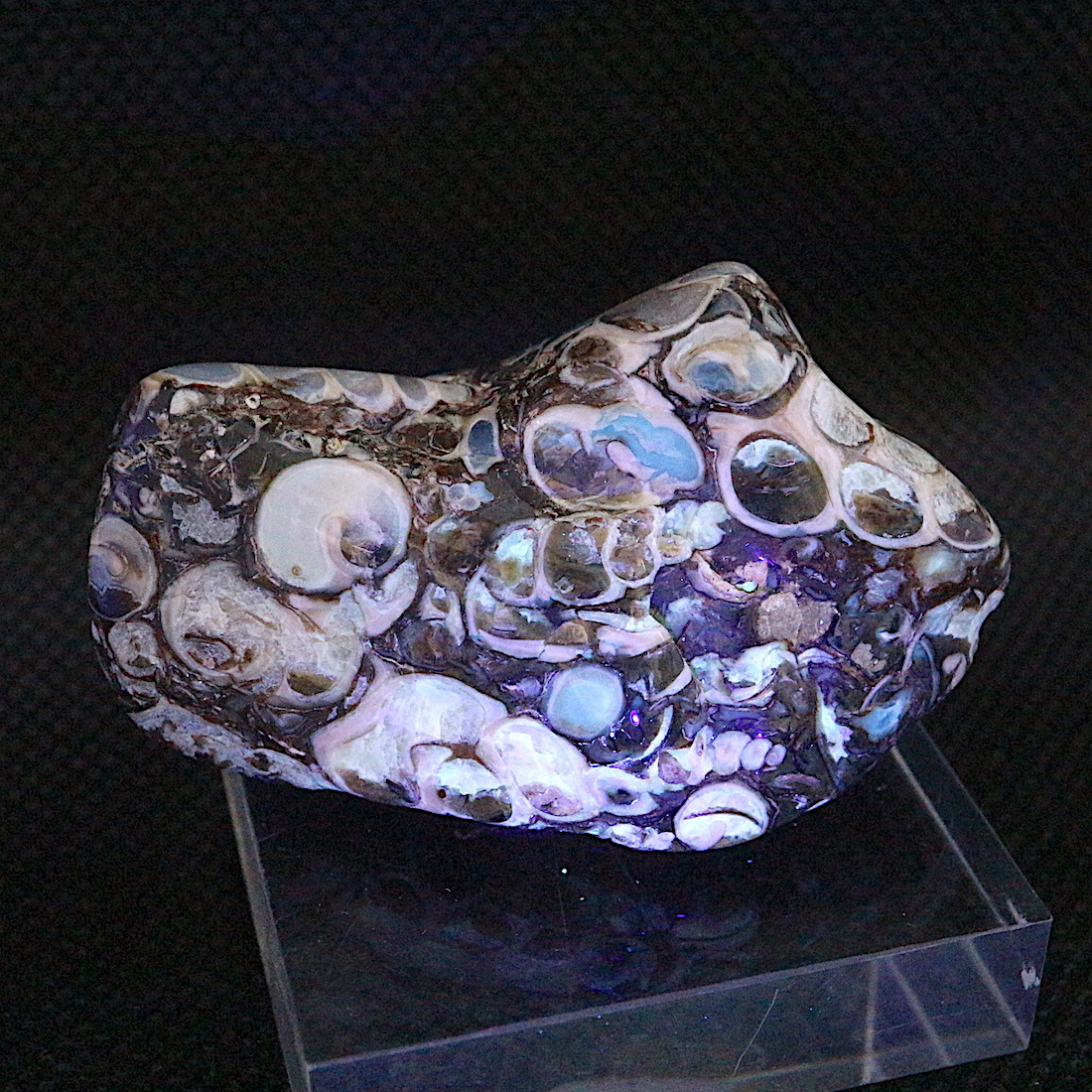 ツリテラ アゲート 研磨 化石 巻貝 瑪瑙   原石 37,2g TRL005 鉱物 天然石 パワーストーン