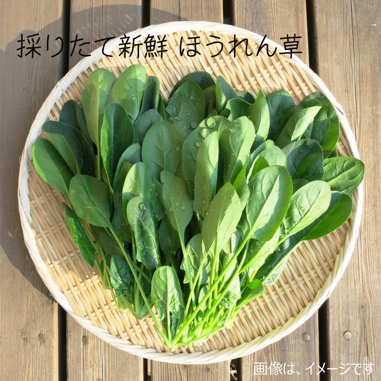 ホウレンソウ 約400g : 6月の朝採り直売野菜 春の新鮮野菜 6月20日発送予定