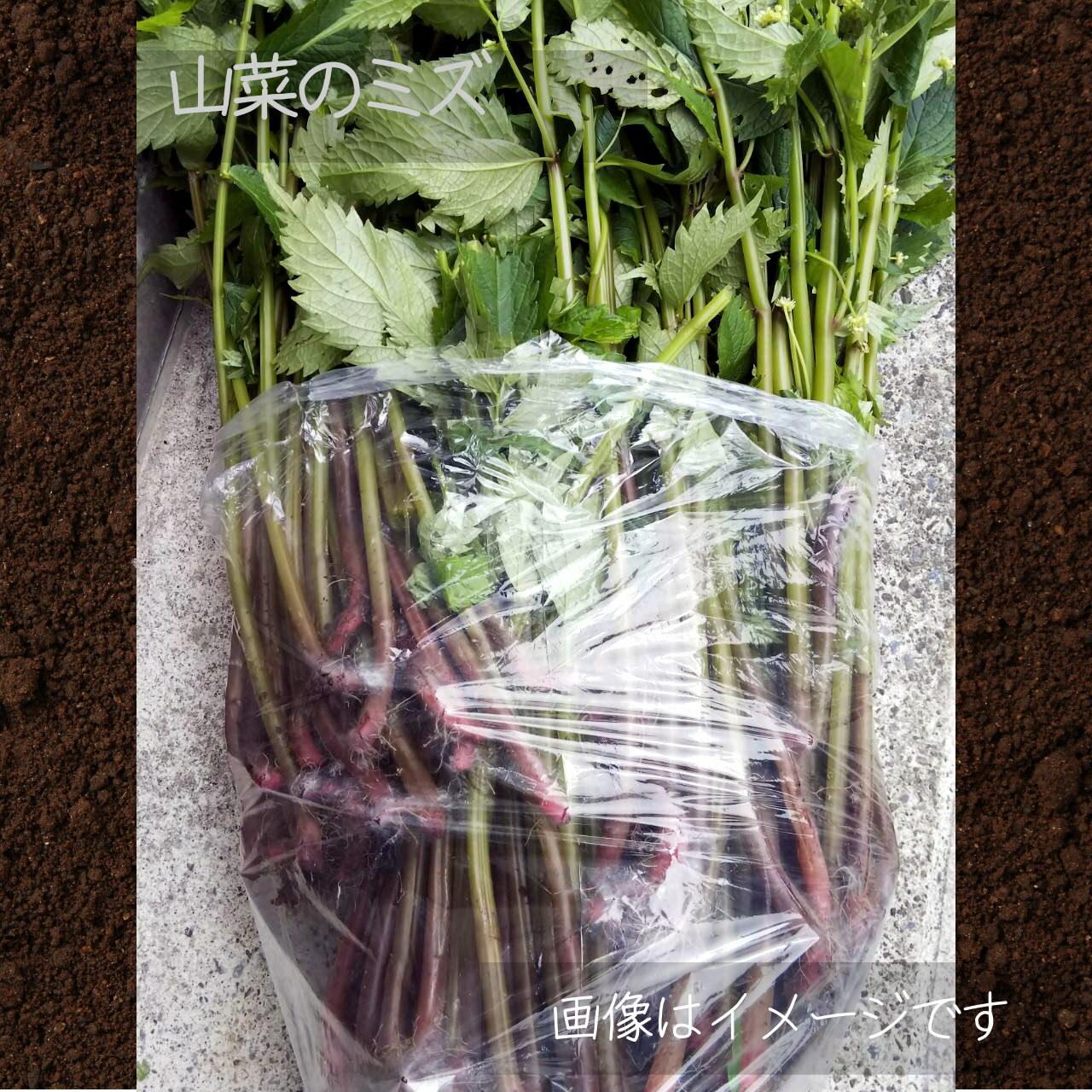 5月の山菜 ミズ 1束 朝採り直売野菜:5月11日発送予定