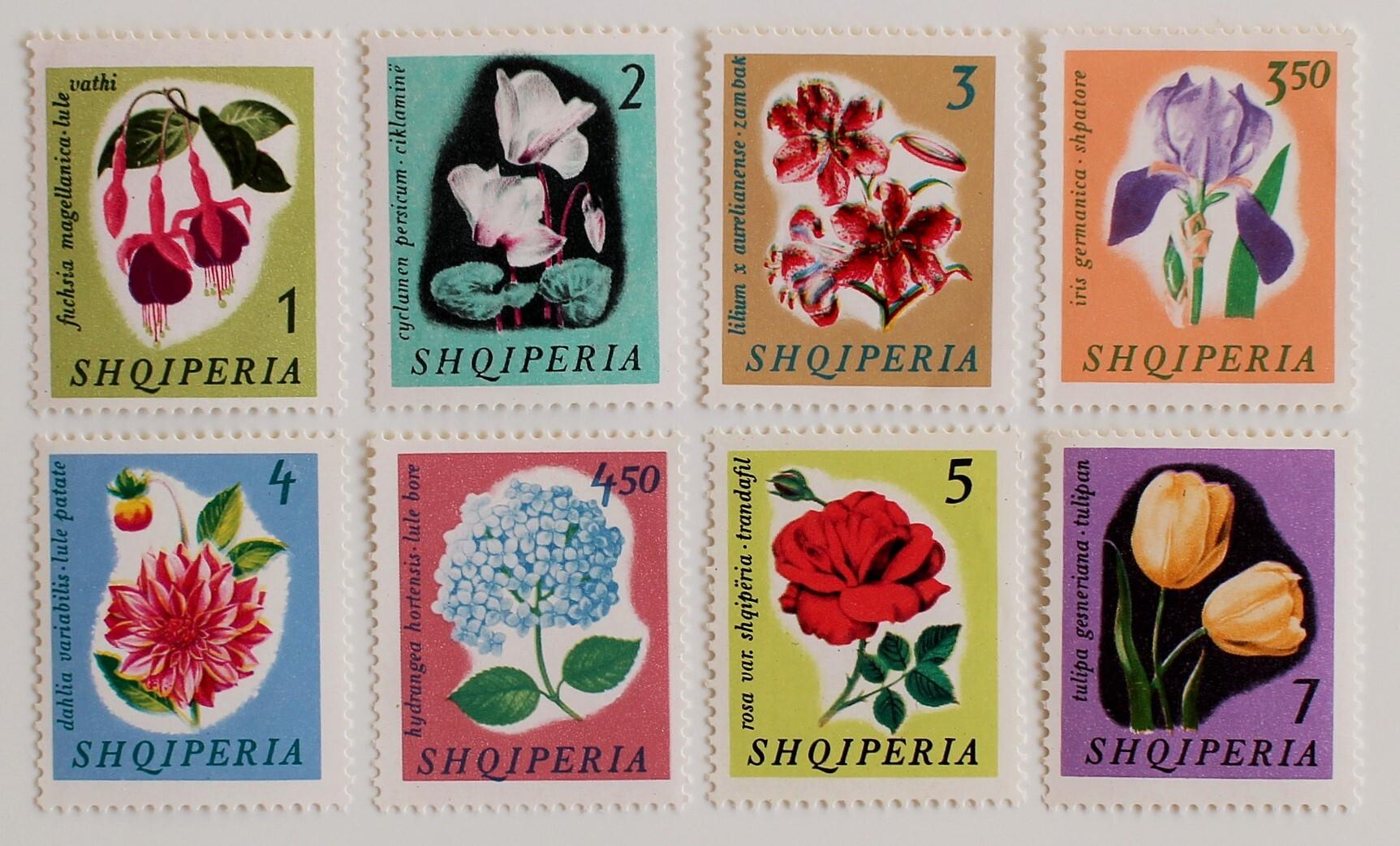 花 / アルバニア  1965