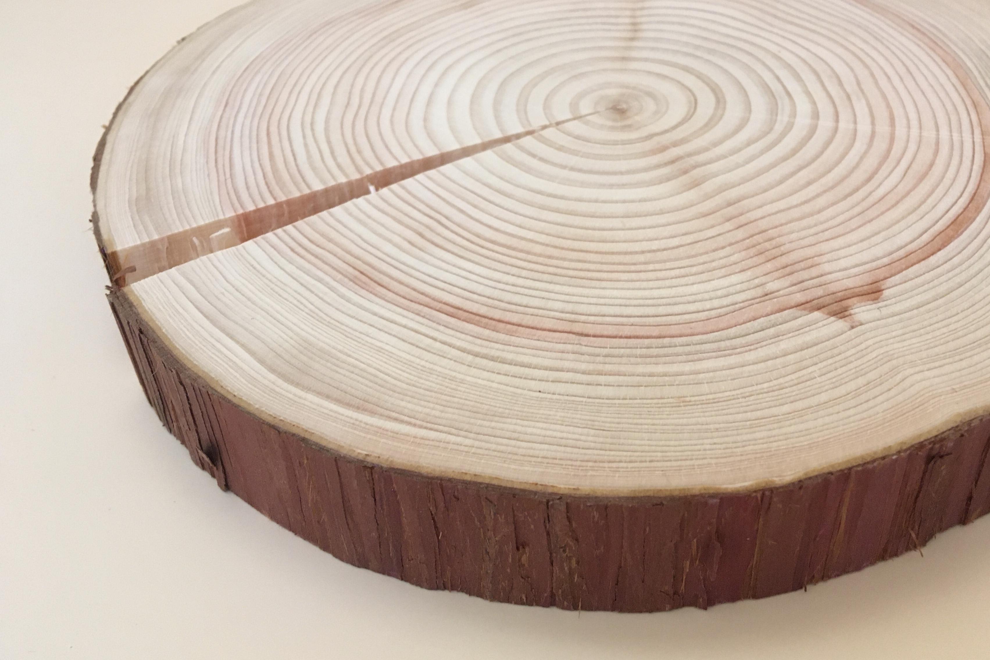 東京の木の「鍋敷き」【送料込み】
