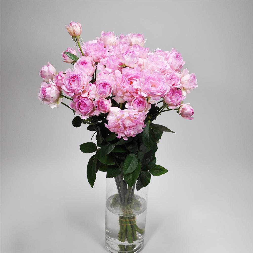 Rose  シーアネモネ10本 (JAしみず バラ部会)