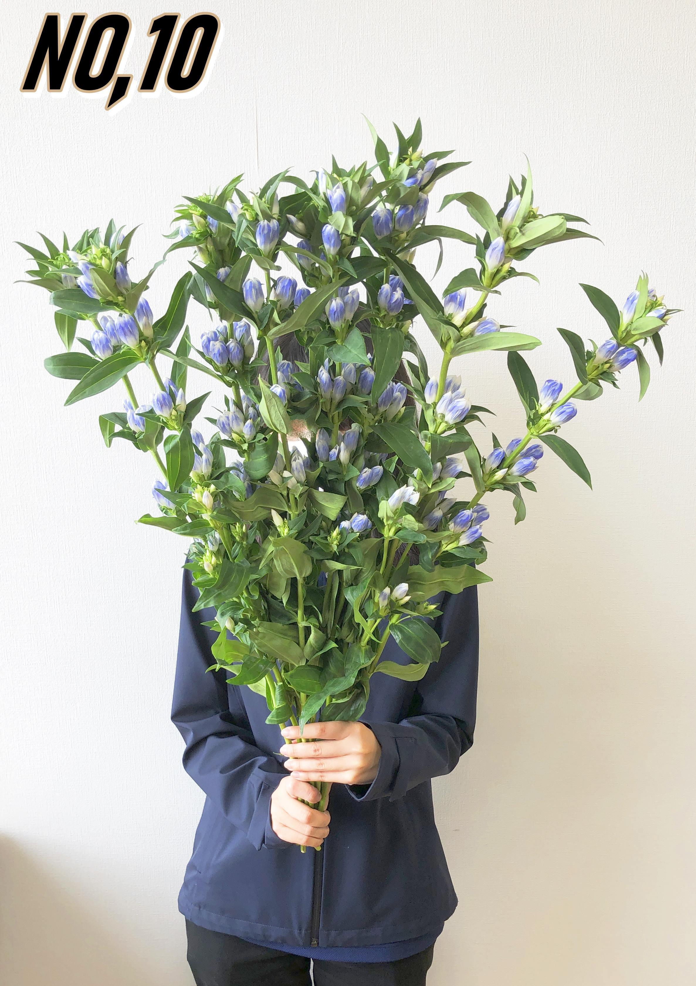 ★ お墓参りへ行こう!国産お供え花シェアBOX30 №3【ロスフラワー救済!】