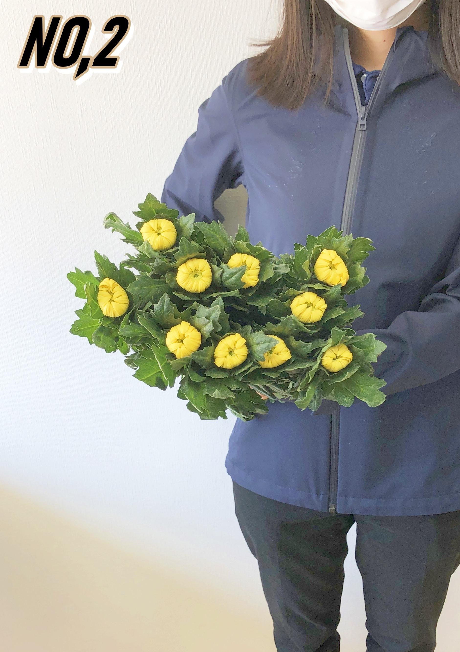 ★送料無料 お墓参りへ行こう!国産お供え花シェアBOX30 №1【ロスフラワー救済!】