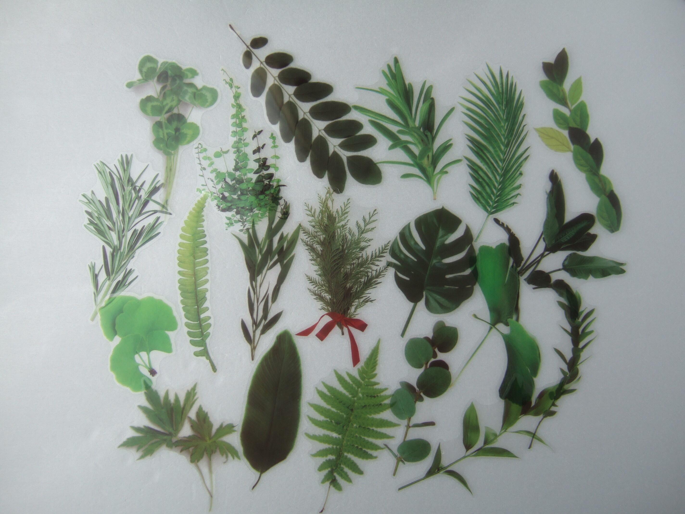 PET素材 シール 全6種 ボタニカル 素材 海外 花 植物 透明 ステッカー A32