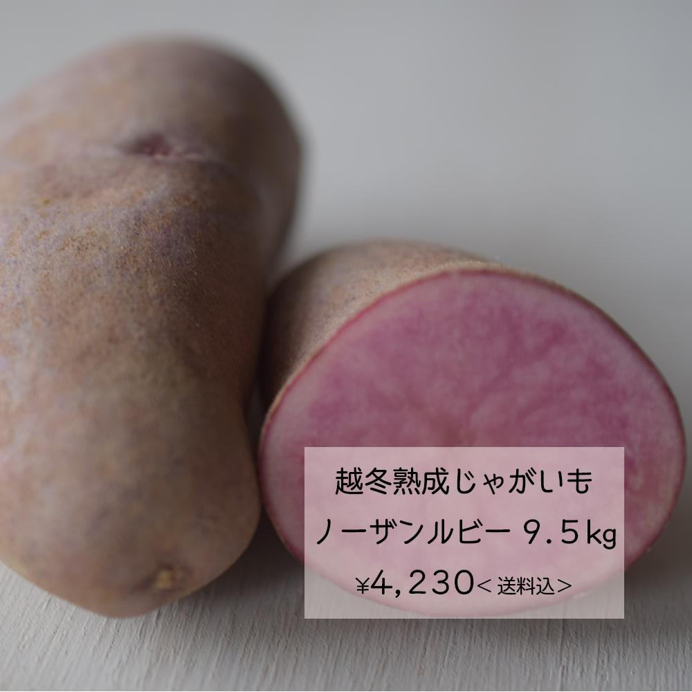 ★越冬熟成じゃがいもノーザンルビー9.5kg<送料込>