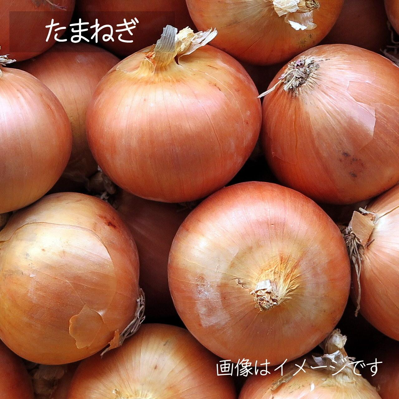 新鮮な秋野菜 : たまねぎ 約2~3個 9月の朝採り直売野菜 9月26日発送予定