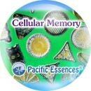 セルラーメモリー[Cellular Memory]『細胞の記憶』