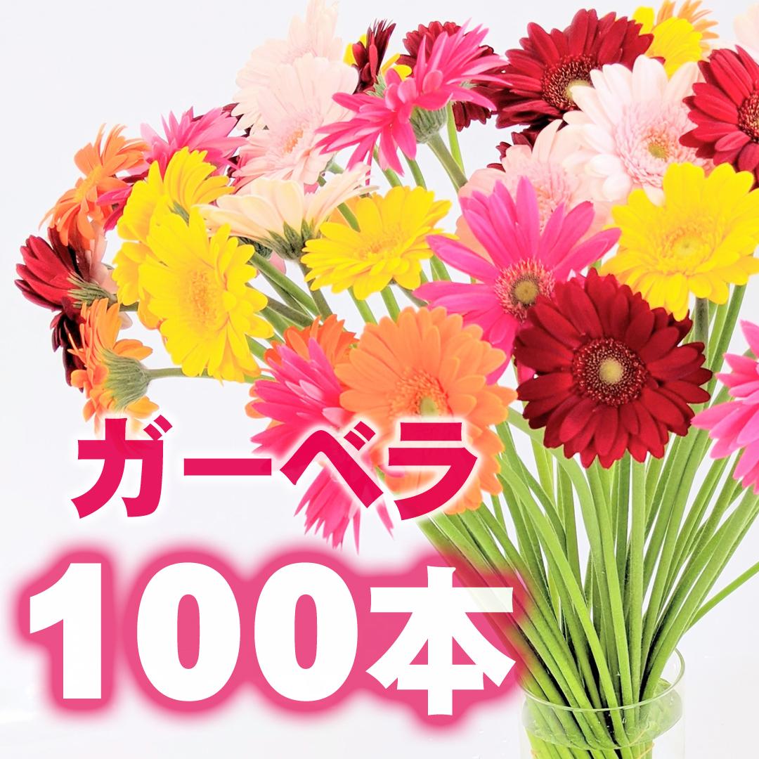 ガーベラ 100本【ビタミン・フラワー】★フラワーロス支援