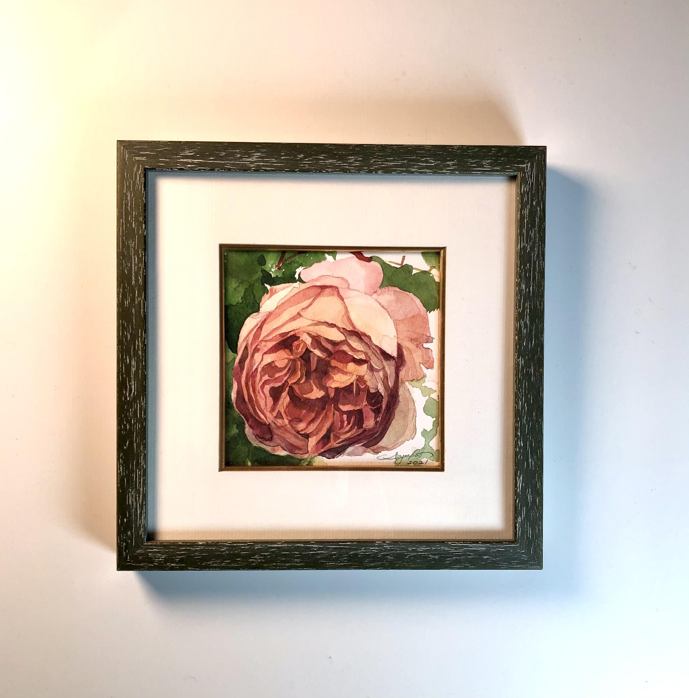 山梨で見つけたピンクのバラ2 - Pink rose found in Yamanashi 2