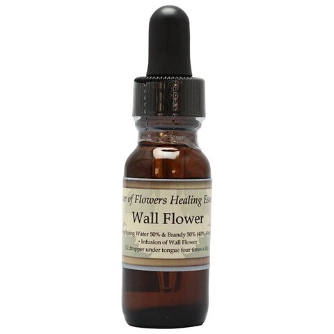 ウォールフラワー[Wall Flower]