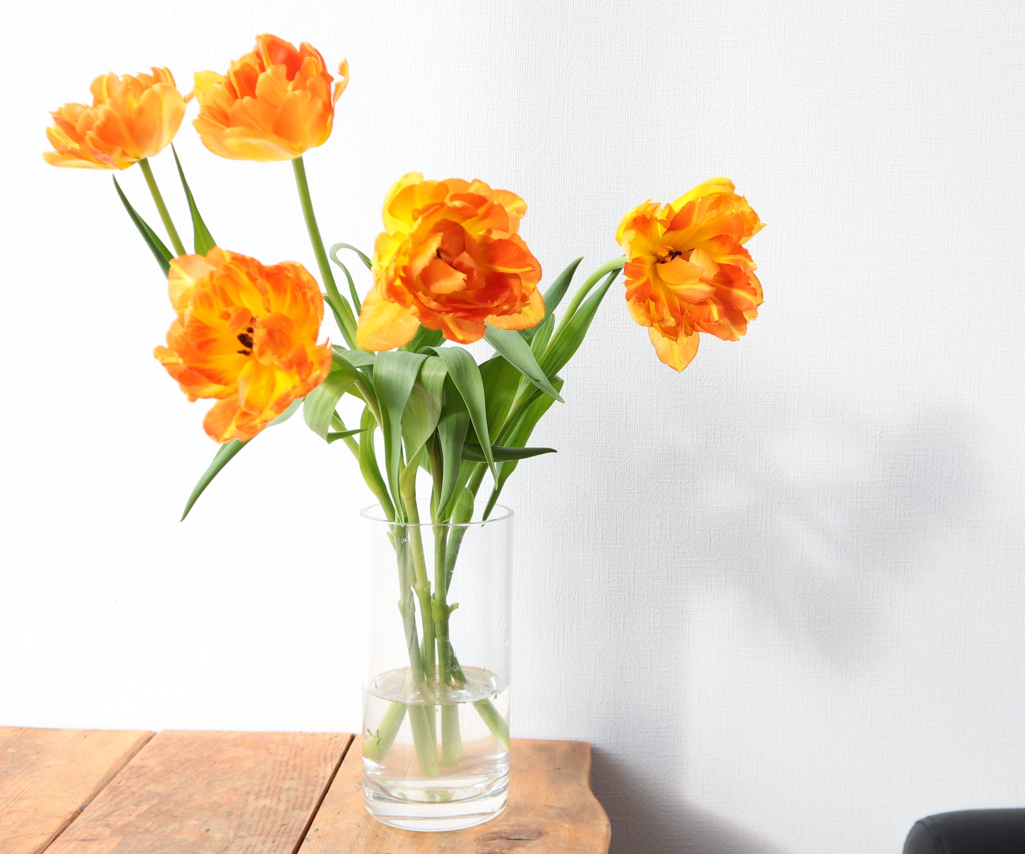 ★送料無料 !八重咲きチューリップ オレンジ色グラデーション『モンテオレンジ』