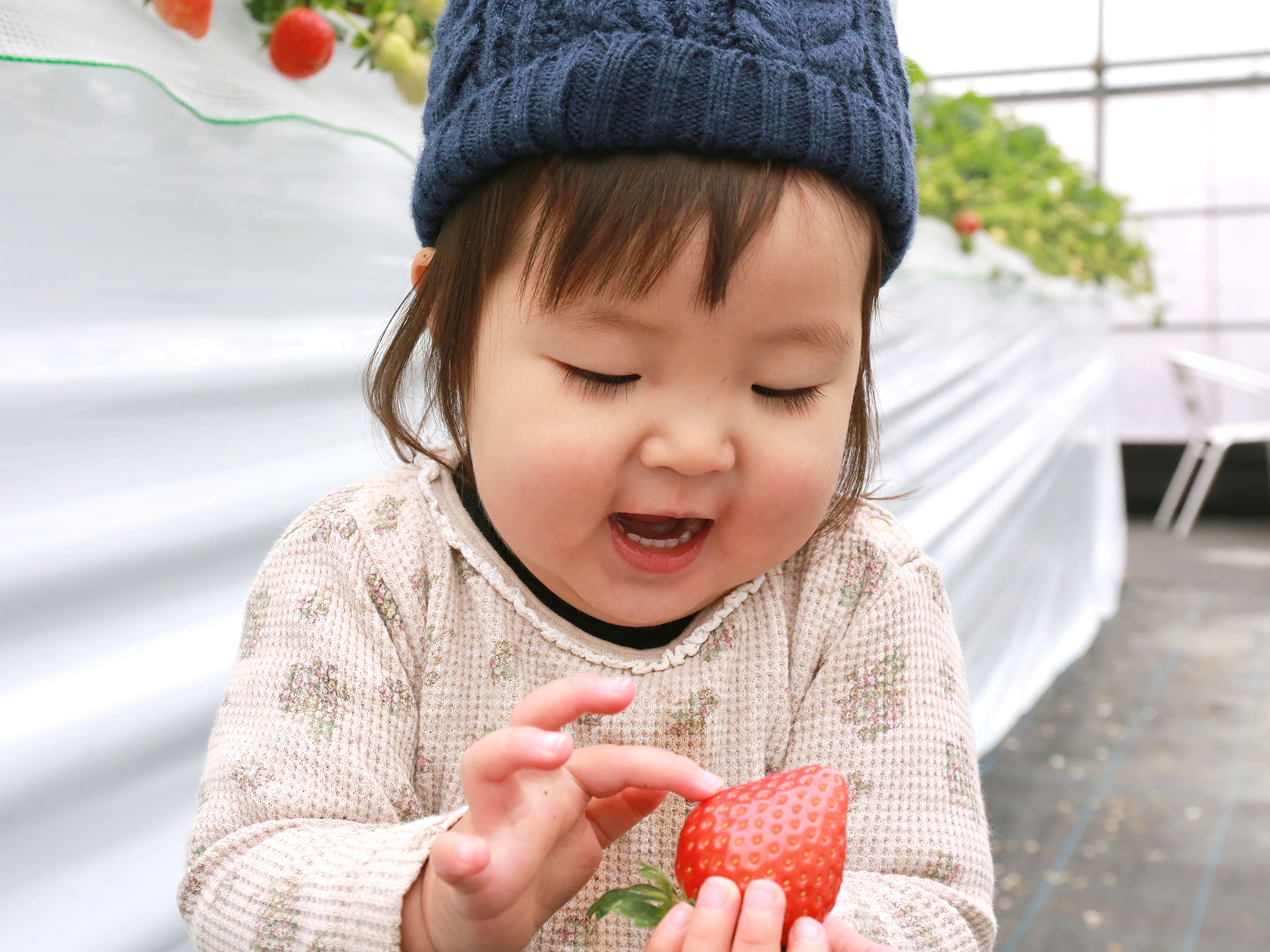【夏ギフト】いちごジェラート 12個セット【3種(あまおう・紅ほっぺ・3種のいちご)x4】