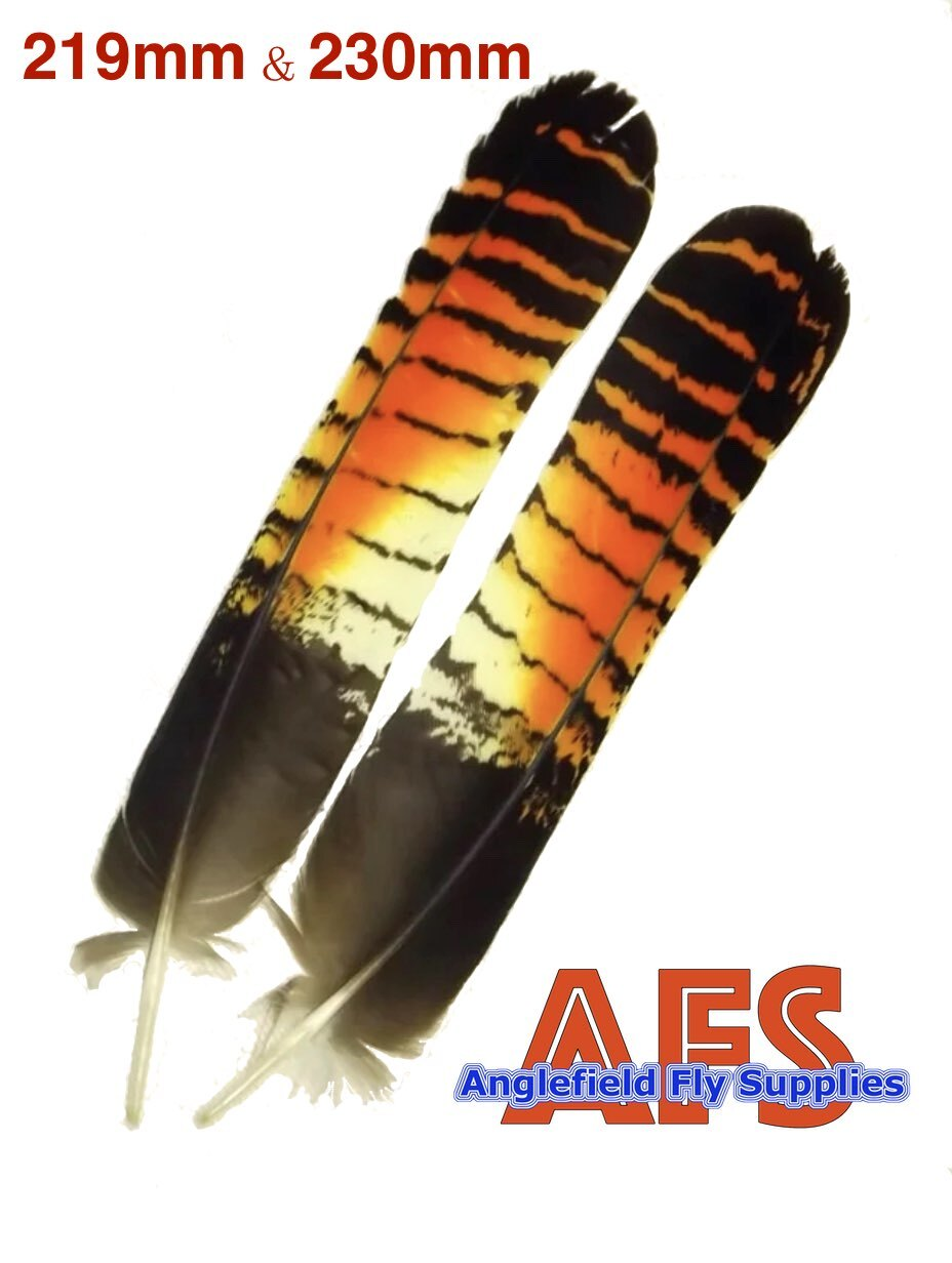 Red−Tail Black-Cockatoo (Female)Tails 1 pair