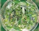 グリーンエッセンス[Green Essence]
