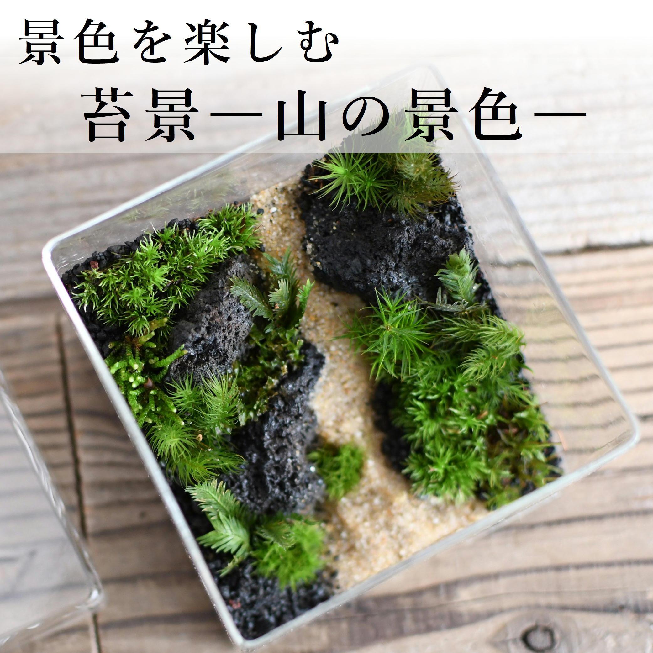 【景色を楽しむ苔テラリウム】苔景−山の景色− BOX Lsize