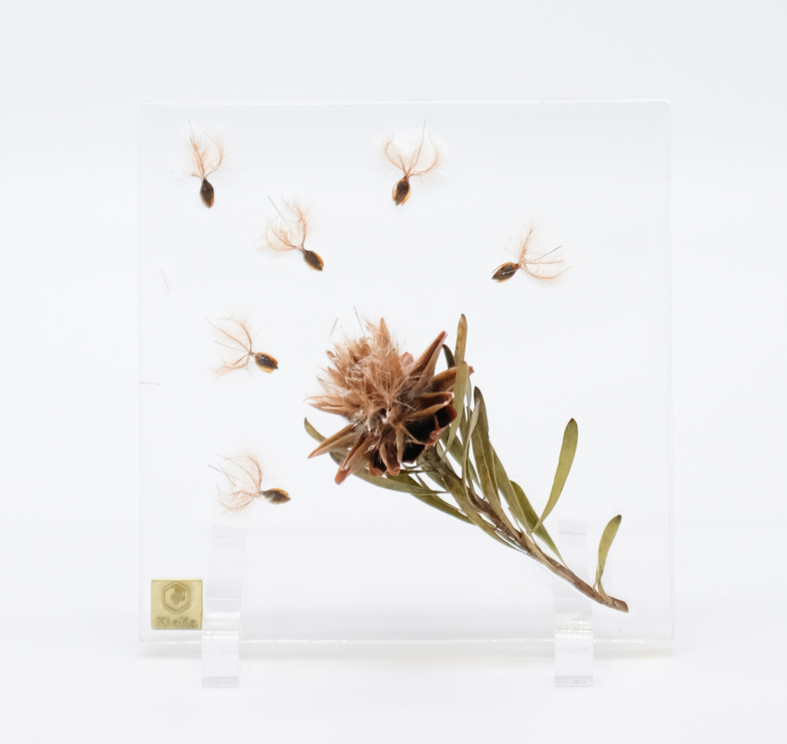 dried flower square スターコーン