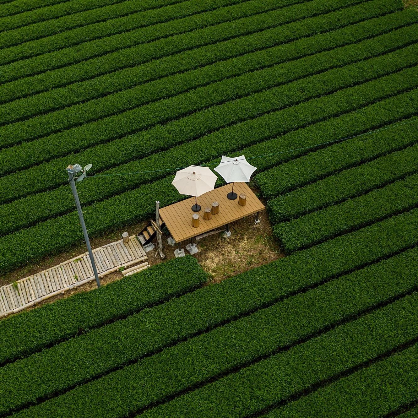 両河内でお茶テラス体験 Tea Terrace @Ryogochi,Shizuoka