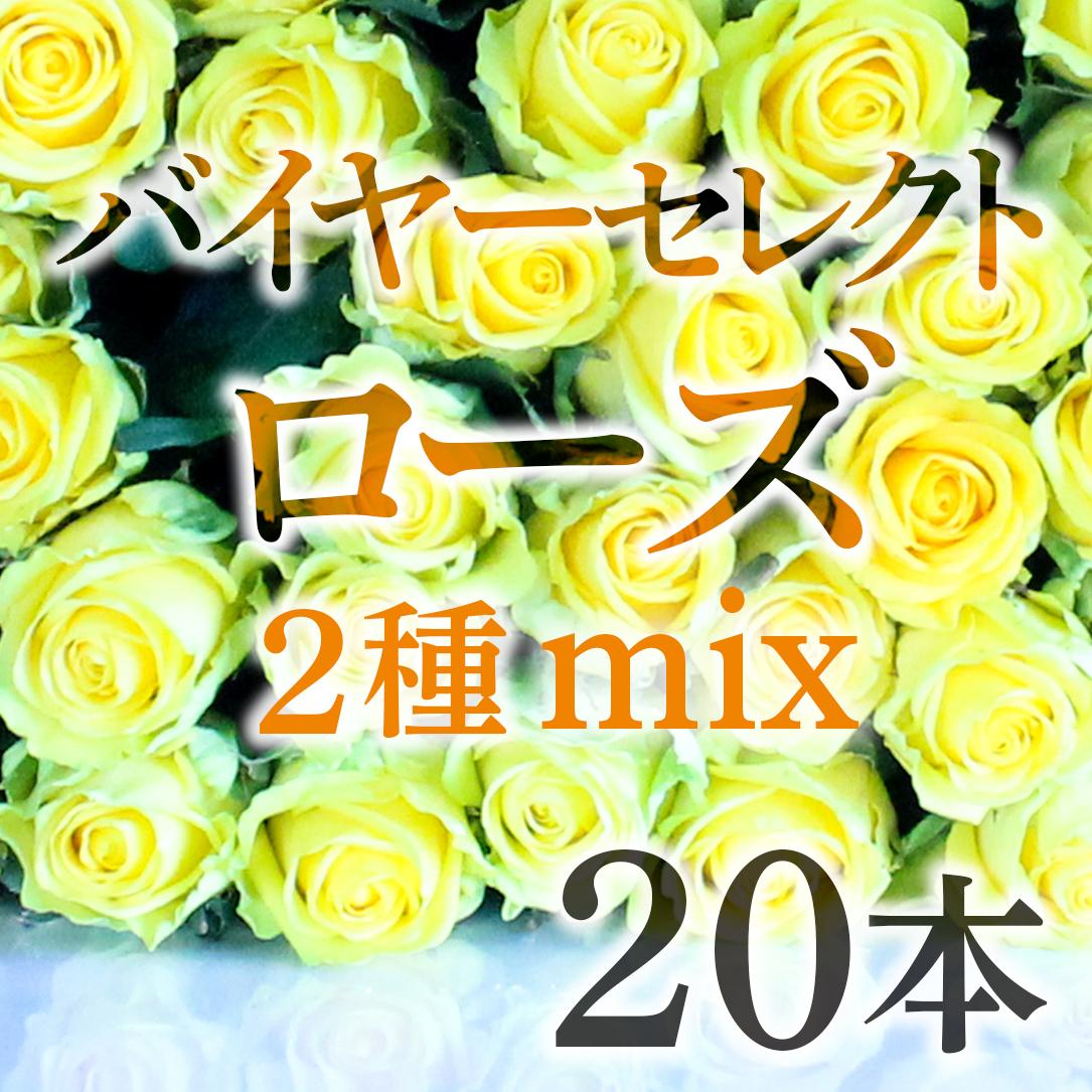バイヤーセレクト☆ローズ  20本(2種mix)【国産バラ☆デイリーユースにおススメ】★フラワーロス支援